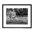 Shard Frame - Zebra